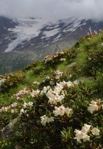 Elbrus4