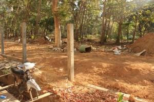 Помойка в пальмовой роще